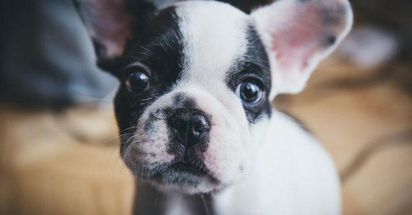 dog-law-dog1