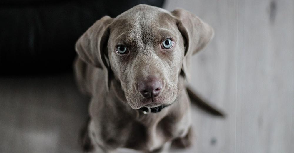 Dog1_1000x523