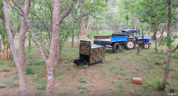 The bear cub is released.  (Photo courtesy of Wildlife SOS/YouTube)