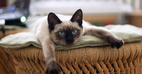 cat-myth-12