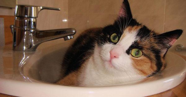 cat-myth-2
