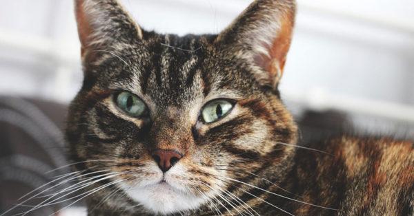 cat-myth-3