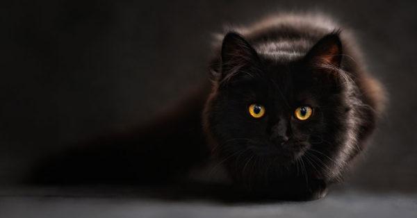 cat-myth-5