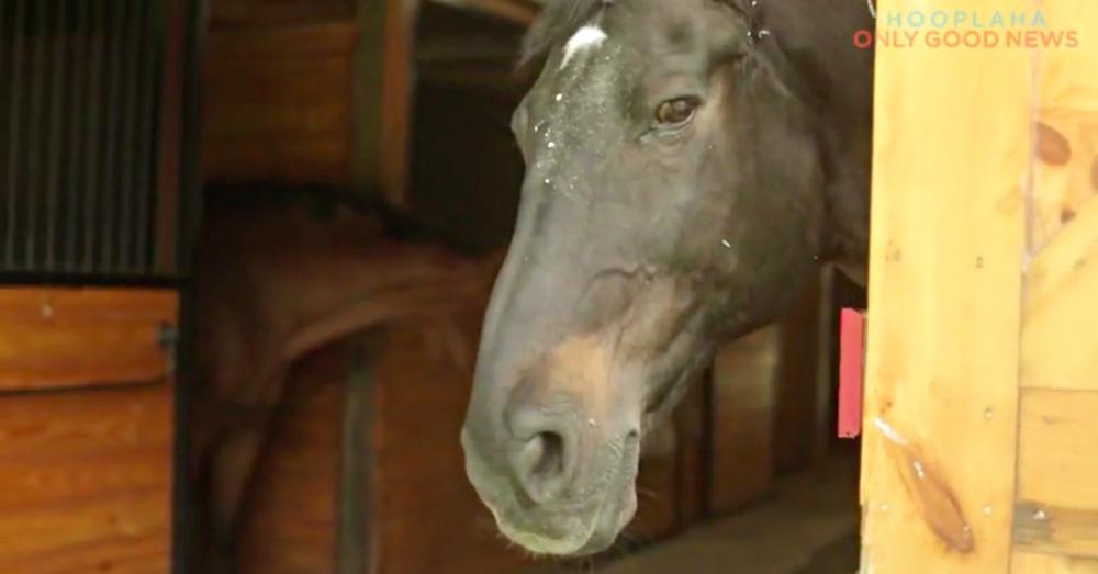 horseback-riding3