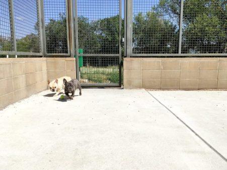 Photos courtesy of Denver Animal Shelter Facebook page