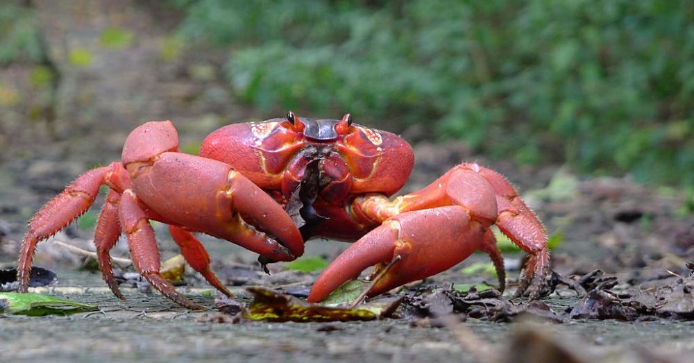 0913_Crab_1000x523