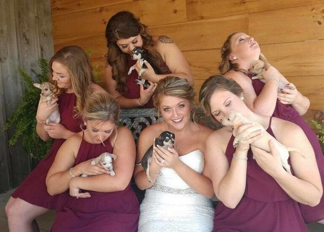 Bridesmaids Ditch The Flowers And Carry Rescue Puppies Down Aisle Instead To Help Them Find Homes PET-icure Pet Grooming & Supplies Pepperell Massachusetts 01463 Pet Store Dog Groomer Near Me