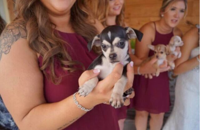 Bridesmaids Ditch The Flowers And Carry Rescue Puppies ...