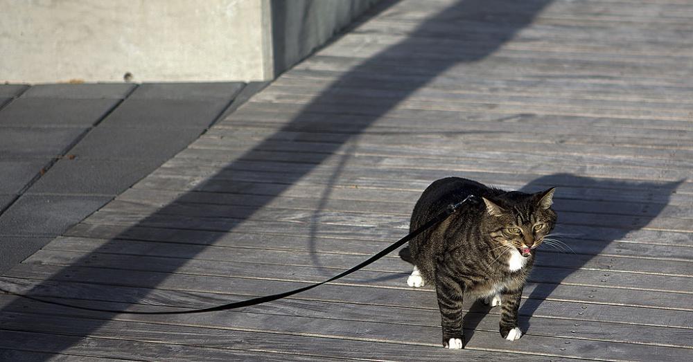 Cat3_1000x523