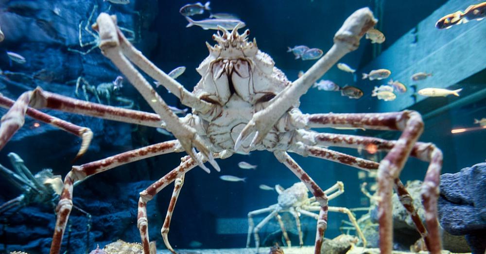 Crab1_1000x523