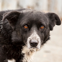 homeless black and white dog with sad eyes