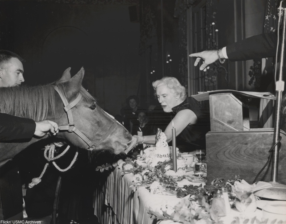 Meet Sergeant Reckless, the Horse Who Was Awarded TWO Purple Hearts
