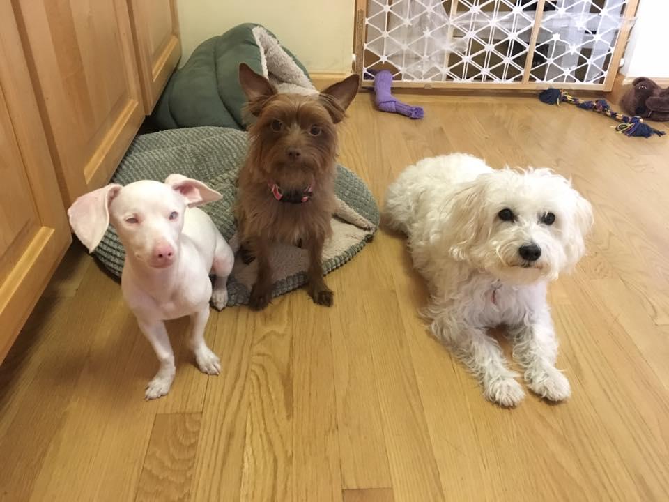 facebook/Piglet, the deaf blind pink puppy