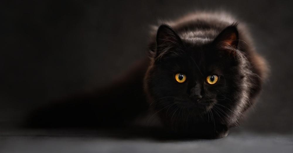 Cat1_1000x523