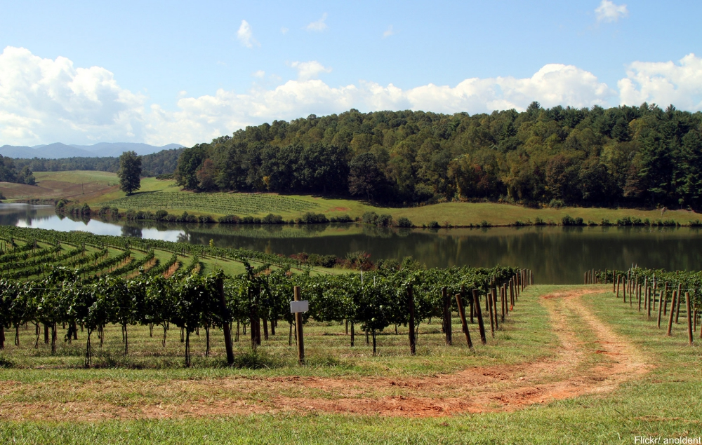 See Inside the Charming and Massive Biltmore Estate-  vineyards