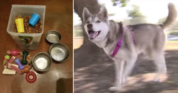 Source: YouTube/Straightful The box of food and toys the dogs were left with, and Layla.