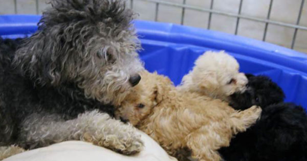 Source: Facebook/SPCA of Texas Dogs rescued from the puppy mill.