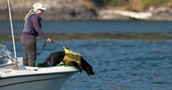 Source: Pinterest/The Bulletin Trainer Elizabeth Seely keeps Tucker secure as he sniffs for whale scat near San Juan Island, Wash.