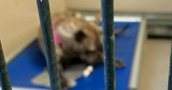 Source: City of Buffalo Animal Shelter Millions of animals will sadly go without love or comfort this year.