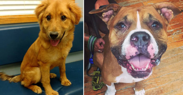 Source: City of Buffalo Animal Shelter Dogs at the City of Buffalo Animal Shelter