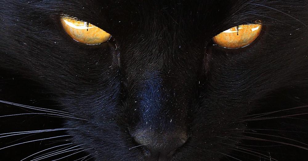 BlackCat1_1000x523