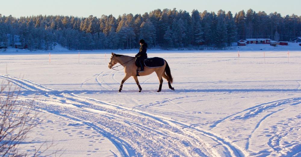 Horse walking in snow