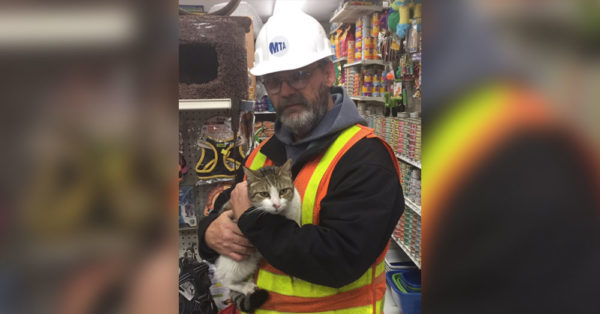Source: Twitter/NYCTSubway Maintenance supervisor Tom Doerbecker has been credited with saving the cat.