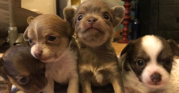 Source: Rescue Bank Monet's puppies.