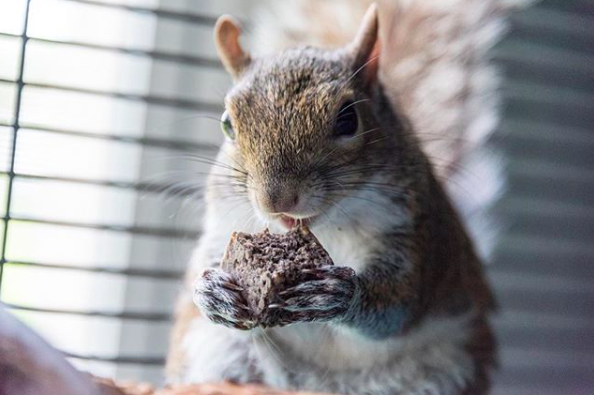 instagram/seymour_the_squirrel