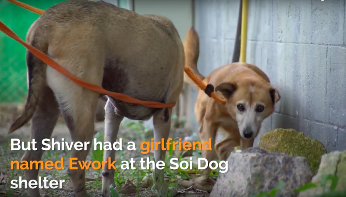 Soi Dog Foundation