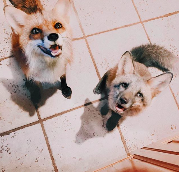 instagram/juniperfoxx