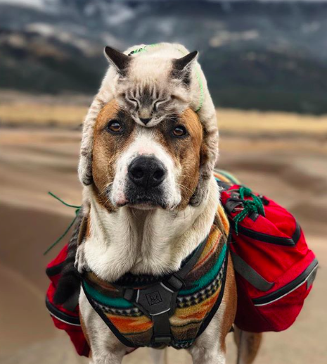 Instagram/henrythecoloradodog