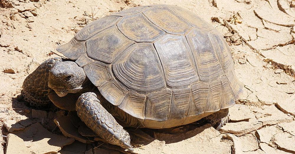 Turtle1_1000x523
