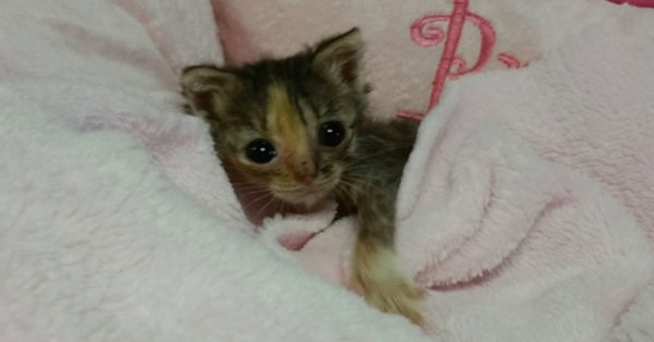 Source: National Kitten Coalition Bijou was the runt of a litter of five kittens, one which did not survive.