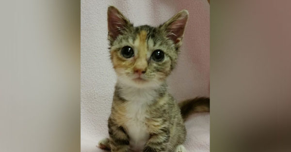 Source: National Kitten Coalition Bijou lives in Charlotte, North Carolina.