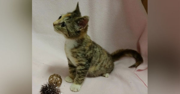 Source: National Kitten Coalition Bijou will likely be about half the size of a regular cat all her life.