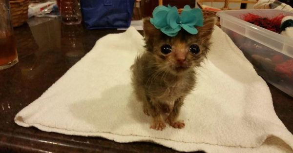 Source: National Kitten Coalition Bijou was just 2.6 ounces when she was rescued.