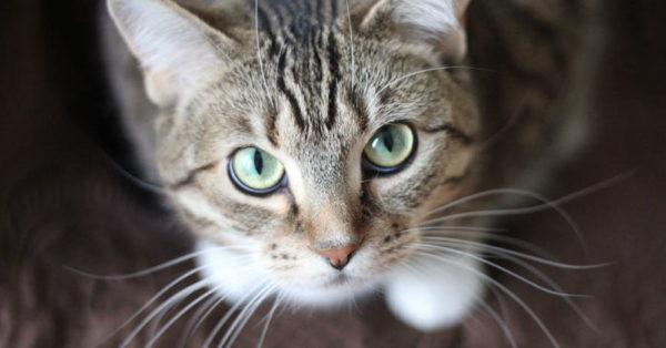 cat-4