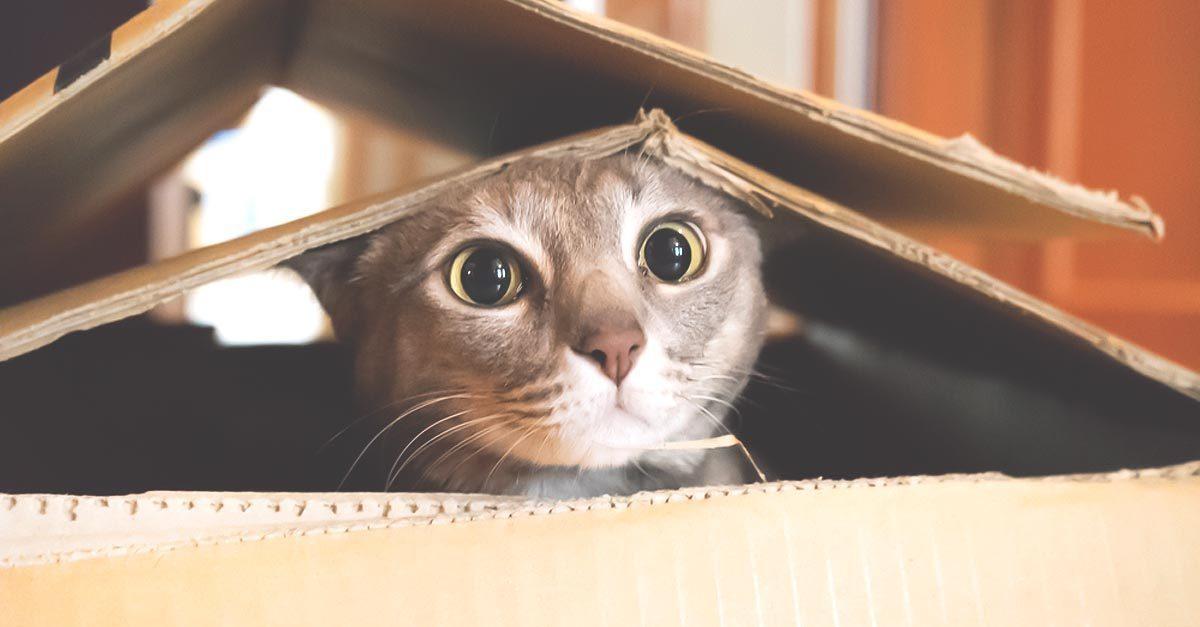 cat-tent-1200x627