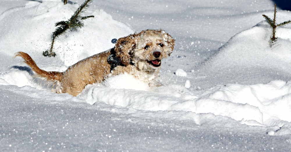 dog_in_snow