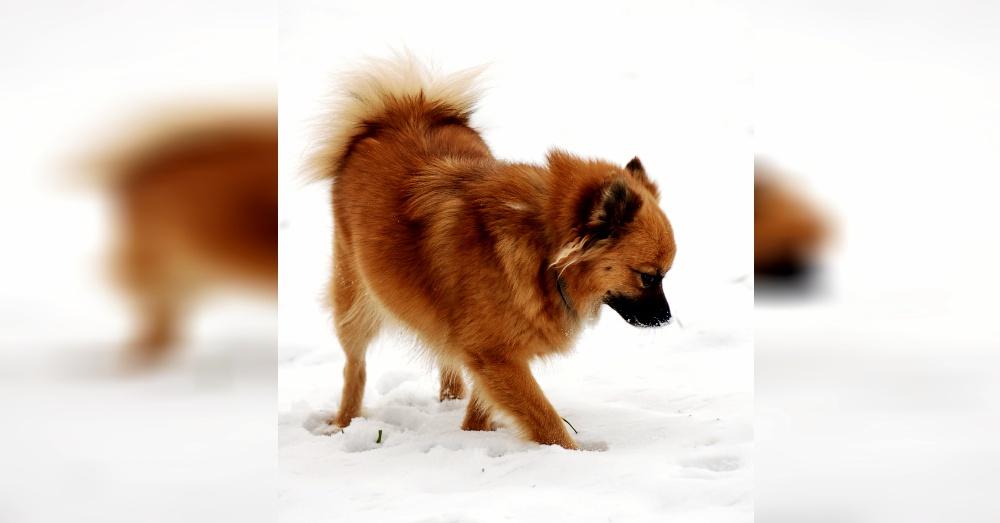 dog_scavenger_hunt_winter