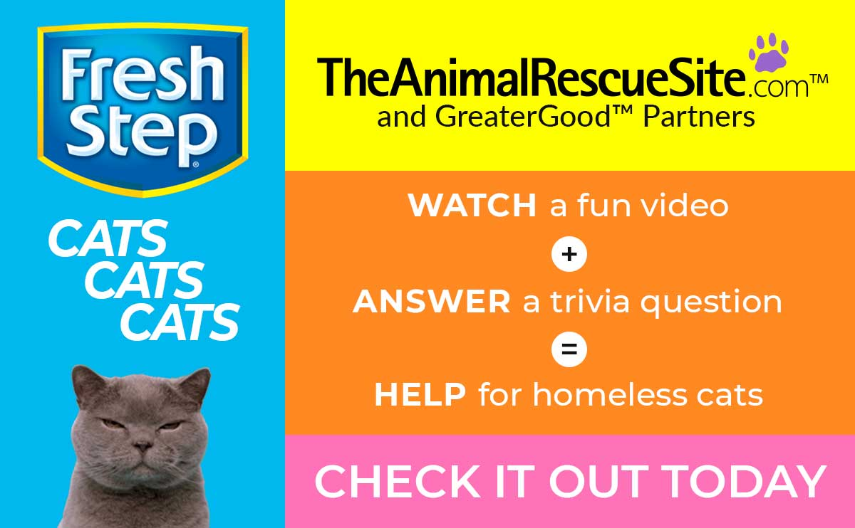 WATCH a fun video + ANSWER a trivia question = HELP for homeless cats. Check it out today!