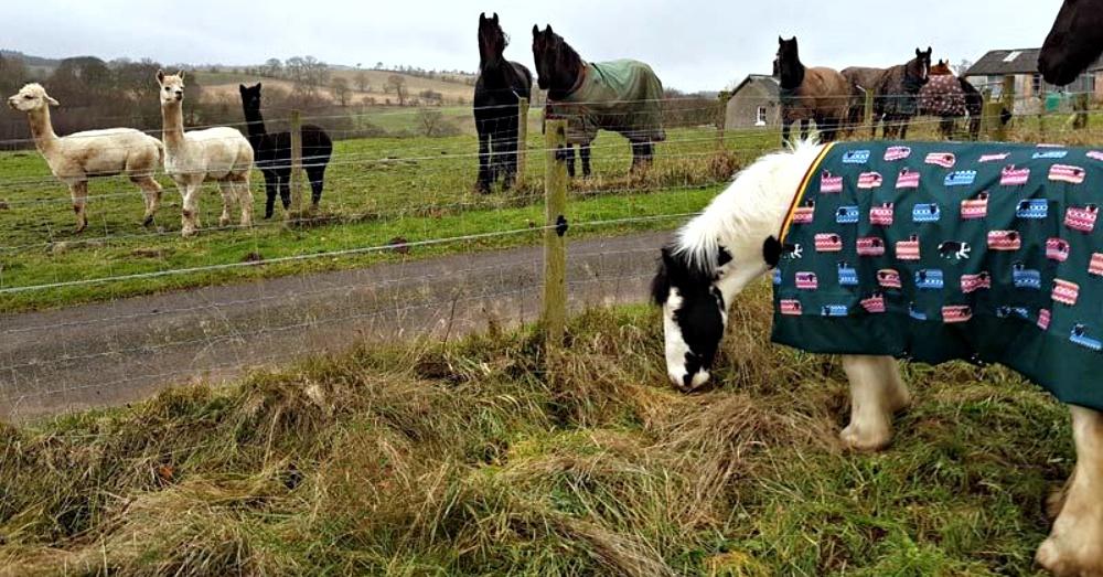 Photo: Horse Talk