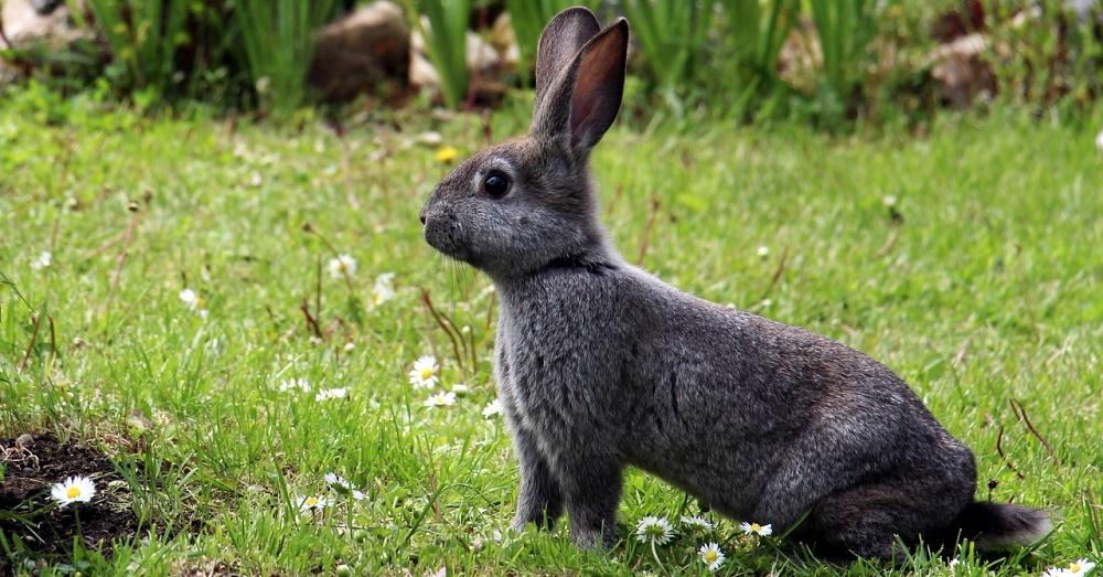 Rabbit-fur-free