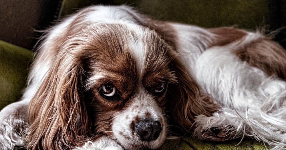 dog-2785066_1920
