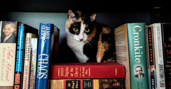 Source: flickr/Steve Rainwater Not all library cats are unwelcome.