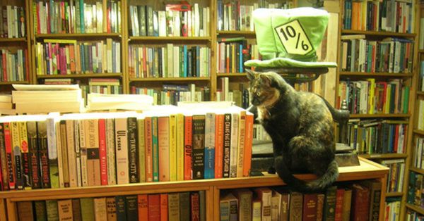 Source: flickr/brewbooks It's easy for a cat to make itself comfortable amongst so many books.