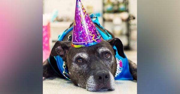 Source: Facebook/Kaylee's Bucket List Kayl;ee was adopted from the BARCS animal shelter, in Baltimore.