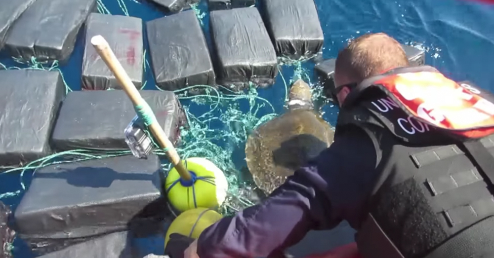 Screenshot/U.S. Coast Guard -- Guardsmen work to free a sea turtle from bundles of cocaine found in the Pacific.