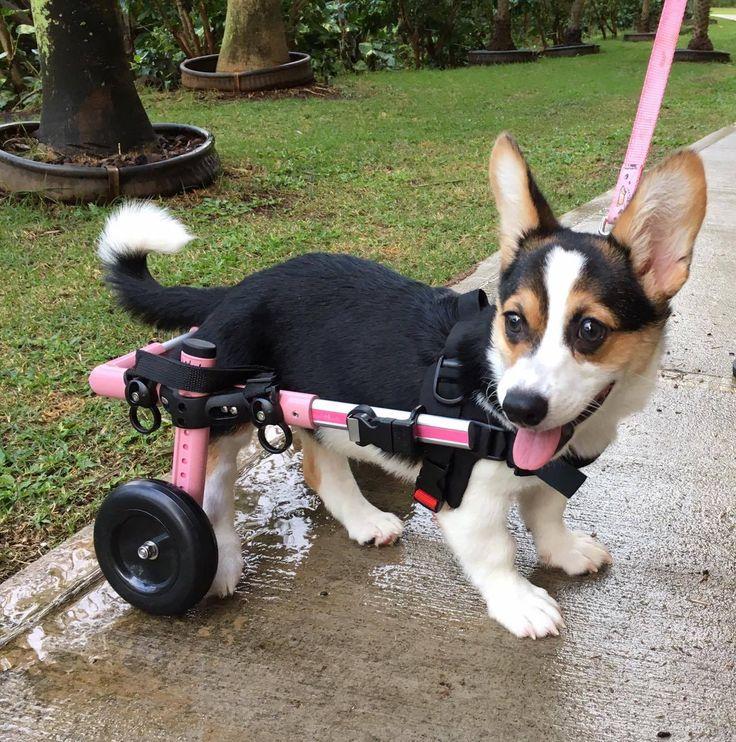 handicappedpets.com